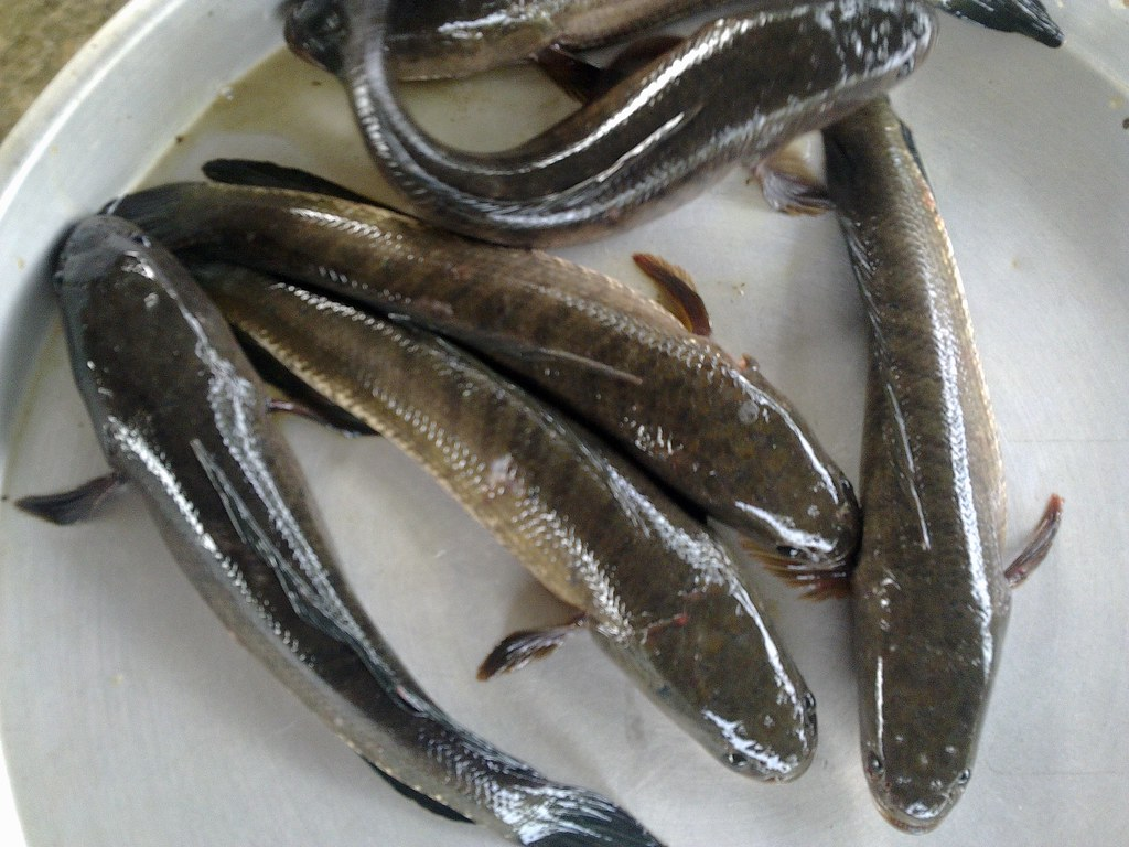 cá lóc kho thơm 6