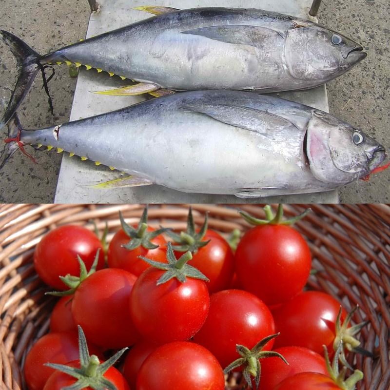 Cá ngừ kho cà chua 2