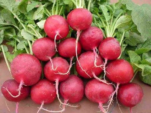 củ cải đỏ 4